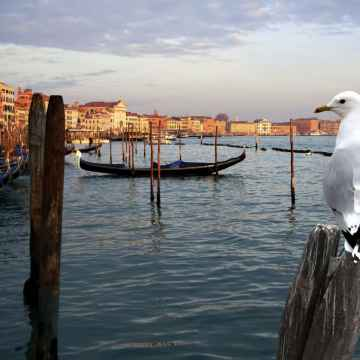 Boat Tour on the Grand Canal to discover secret Venice