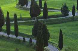 Trees of The Chianti valley