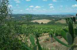 Hike in Chianti