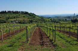 Supertuscan wine tour