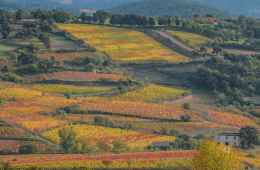 This food tour in South Sardinia will give you the opportunity to visit wonderful countryside areas
