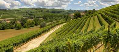 Tour in Chiantishire and Florence countryside, Tuscany
