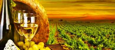 Italian wine and food tasting Tour