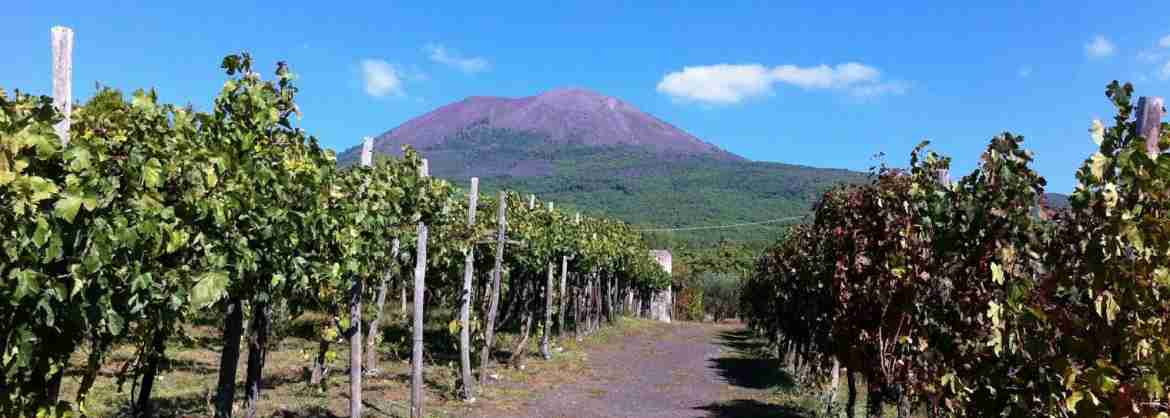 Half-day Food & Wine Tour of the Mount Vesuvius, departing from Naples
